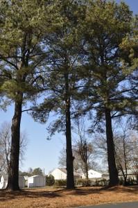 3-trees-199x300
