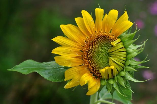 Macro Flowers 083